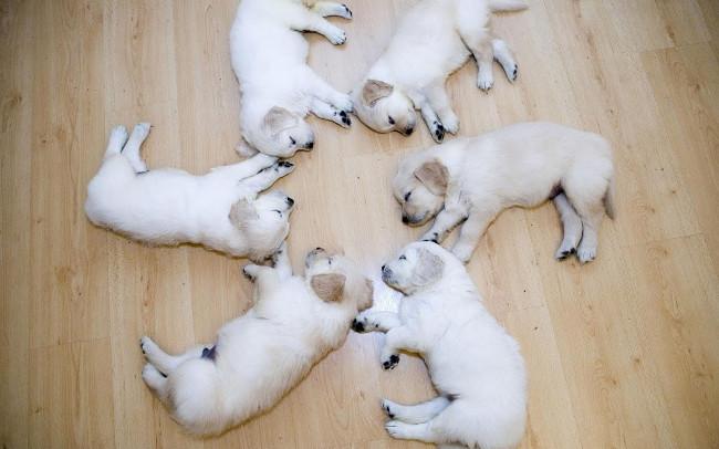 Bộ hình nền những chú chó đáng yêu cho máy tính 22