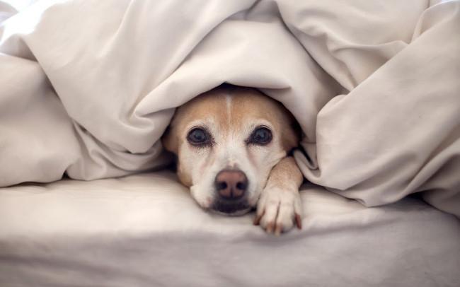 Bộ hình nền những chú chó đáng yêu cho máy tính 27