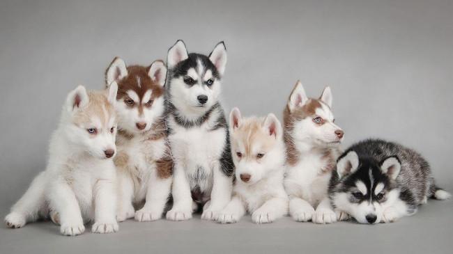 Bộ hình nền những chú chó đáng yêu cho máy tính 35