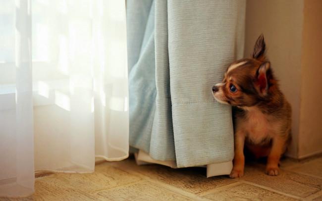 Bộ hình nền những chú chó đáng yêu cho máy tính 8