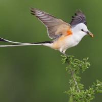 Chim đang thích nghi với biến đổi khí hậu nhờ gen di truyền