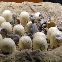 Trứng khủng long hóa thạch từ kỷ Jura được phát hiện ở Trung Quốc