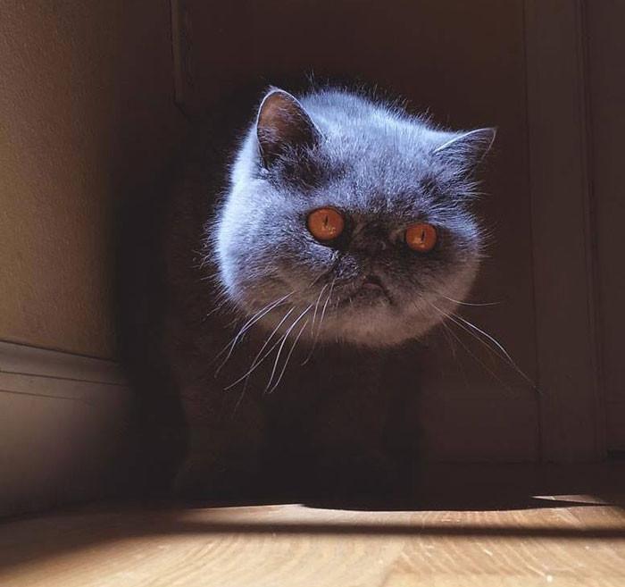 Đầu mèo