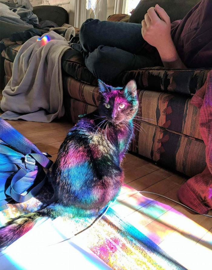 Chú mèo có bộ lông biến màu