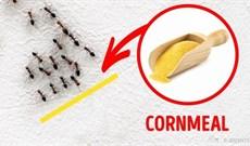 3 cách diệt côn trùng trong nhà đơn giản mà không độc hại