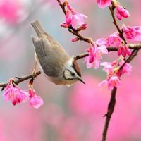 22 bài thơ hay về mùa xuân để chúc mừng năm mới 2021
