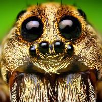 Bảy loài nhện mới được phát hiện, chúng được đặt theo tên của Harry Potter, nhân vật GoT