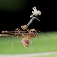Nghiên cứu phát hiện 18 loài nhện bồ nông mới