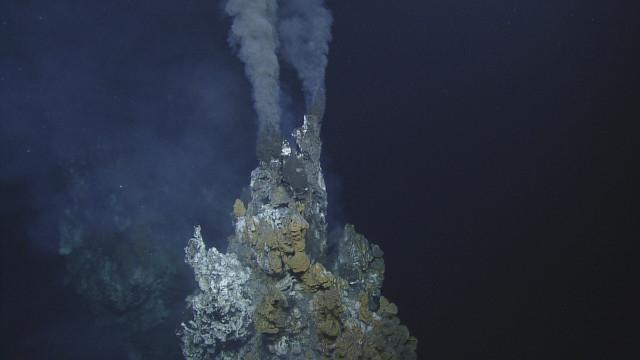 Cá nước sâu dùng miệng phun thủy nhiệt để ấp trứng