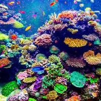 Các rạn san hô bị đe doạ bởi axit hóa đại dương, có thể tan rã trước năm 2100