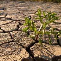 Sự xuống cấp của đất đai đe doạ hàng triệu người trong tương lai