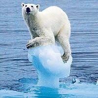 Một nửa số động vật hoang dã của những khu rừng lớn có thể biến mất do hành tinh nóng lên