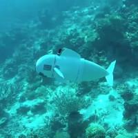 Cá robot giúp chúng ta trải nghiệm cận cảnh thế giới đại dương