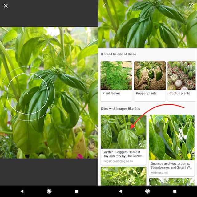 Hình ảnh kết quả của Bing