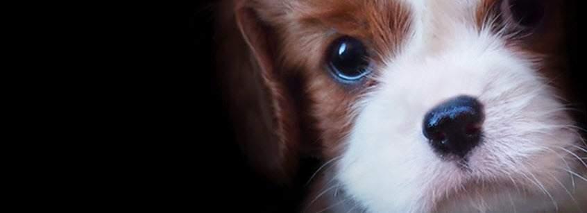 Tổng hợp những ảnh bìa Facebook dễ thương nhất - Ảnh minh hoạ 3