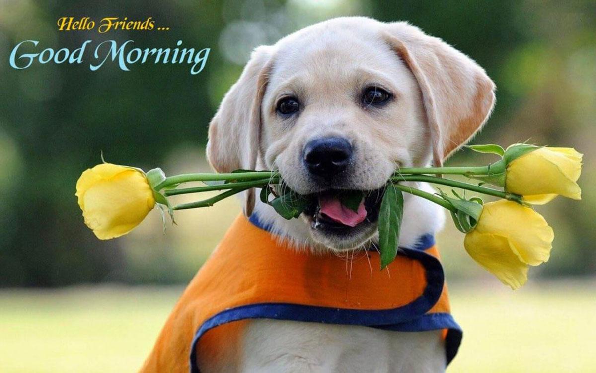 Những ảnh bìa Facebook chào buổi sáng đẹp, ý nghĩa - Ảnh minh hoạ 16