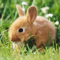 Hình nền thỏ con đáng yêu, dễ thương