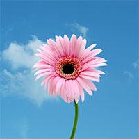Tổng hợp những hình ảnh hoa đẹp nhất