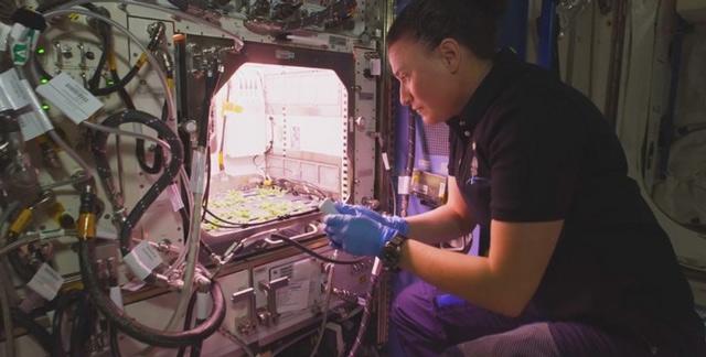 Trồng rau trên trạm ISS