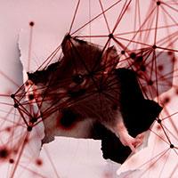 RAT gia nhập top 10 mối hiểm họa toàn cầu