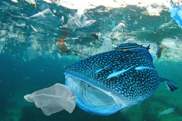 Rác thải nhựa và tác động của nó tới môi trường và động vật hoang dã 3
