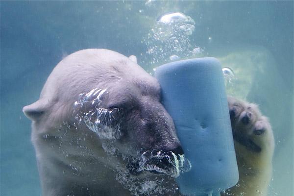 Rác thải nhựa và tác động của nó tới môi trường và động vật hoang dã 4