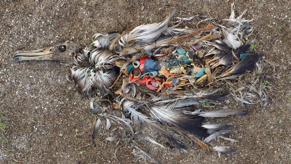 Rác thải nhựa và tác động của nó tới môi trường và động vật hoang dã 6
