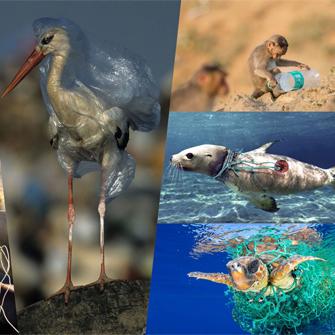 Con người đã và đang dùng nhựa để hủy hoại tự nhiên như thế nào?