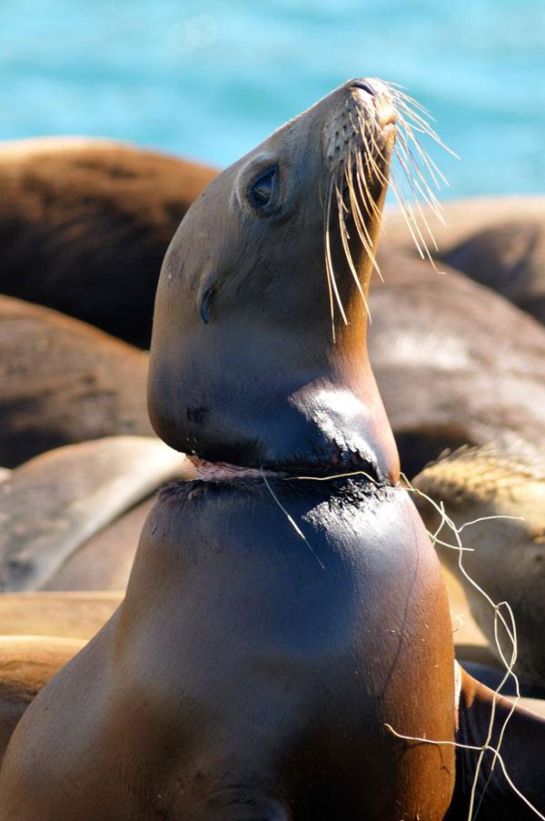 Rác thải nhựa và tác động của nó tới môi trường và động vật hoang dã 13
