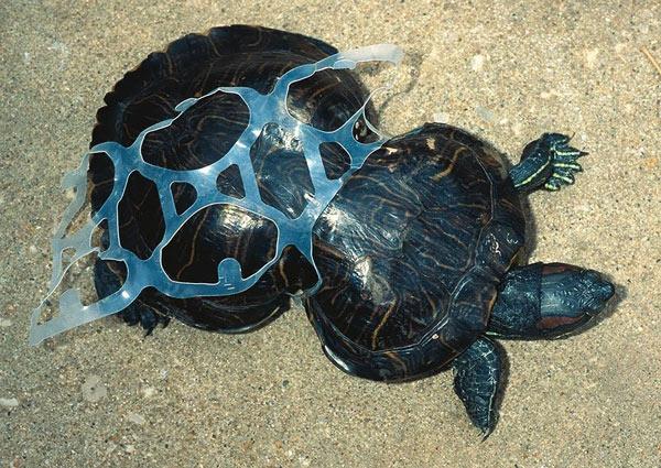 Rác thải nhựa và tác động của nó tới môi trường và động vật hoang dã 14