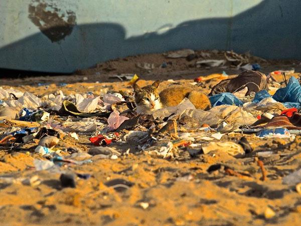 Rác thải nhựa và tác động của nó tới môi trường và động vật hoang dã 16