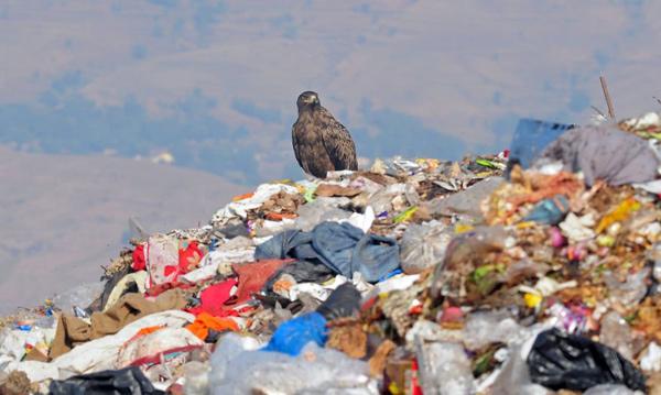Rác thải nhựa và tác động của nó tới môi trường và động vật hoang dã 18