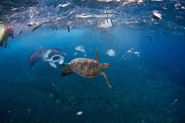 Rác thải nhựa và tác động của nó tới môi trường và động vật hoang dã 19