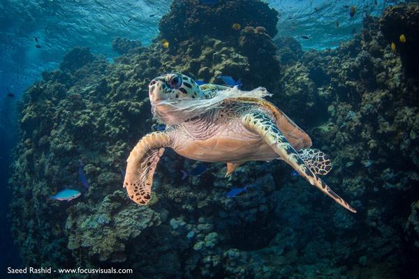 Rác thải nhựa và tác động của nó tới môi trường và động vật hoang dã 20