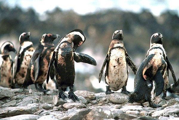 Rác thải nhựa và tác động của nó tới môi trường và động vật hoang dã 31