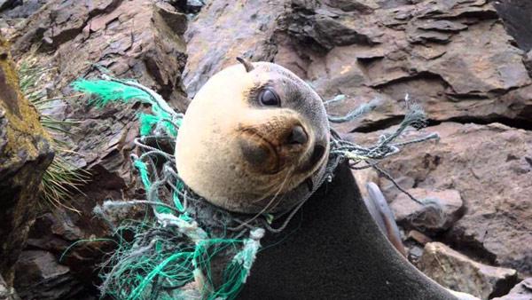 Rác thải nhựa và tác động của nó tới môi trường và động vật hoang dã 32