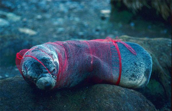 Rác thải nhựa và tác động của nó tới môi trường và động vật hoang dã 36