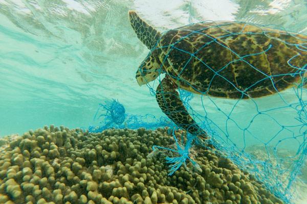 Rác thải nhựa và tác động của nó tới môi trường và động vật hoang dã 37