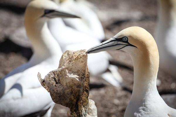 Rác thải nhựa và tác động của nó tới môi trường và động vật hoang dã 41