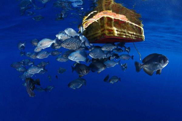 Rác thải nhựa và tác động của nó tới môi trường và động vật hoang dã 42