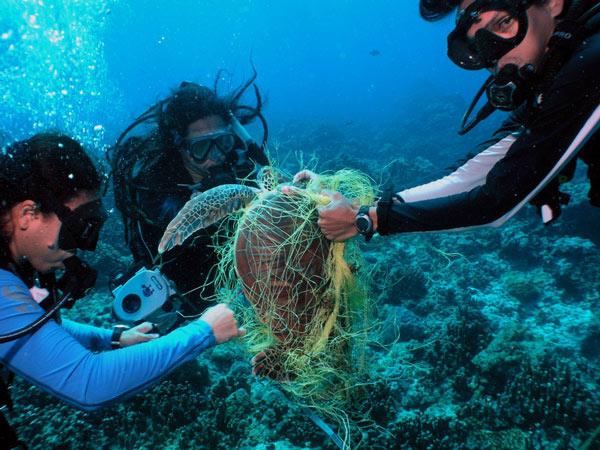 Rác thải nhựa và tác động của nó tới môi trường và động vật hoang dã 46
