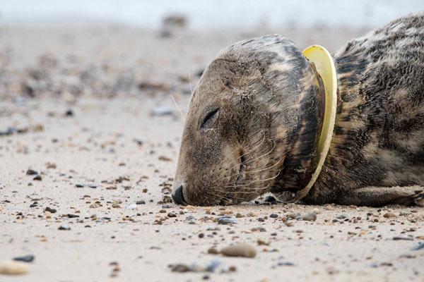 Rác thải nhựa và tác động của nó tới môi trường và động vật hoang dã 47