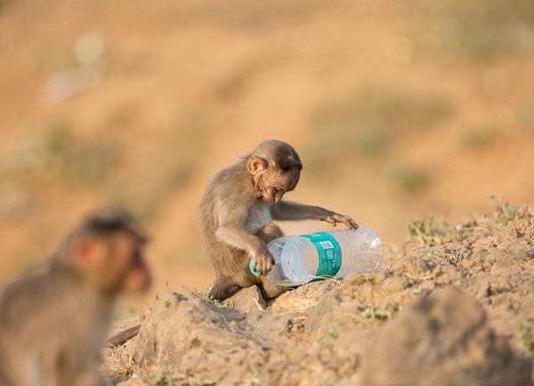 Một con số đáng báo động là trên toàn thế giới có gần 1 triệu chai nước nhựa được bán ra mỗi phút