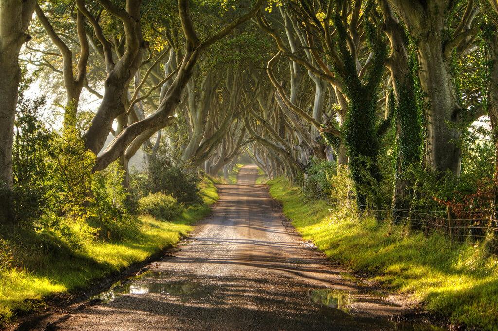 Đường cây sồi già Dark Hedges gần ngôi làng Armoy ở Bắc Ai-len