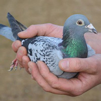 Những con vật đắt nhất hành tinh, con đắt nhất giá 4,1 triệu USD