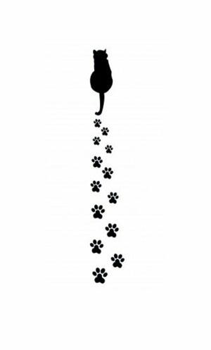 Hình nền mèo cute 16