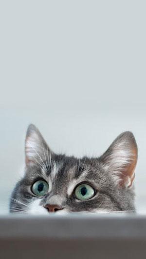Hình nền mèo cute 17