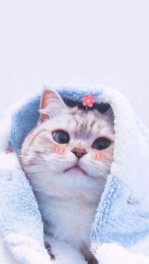 Hình nền mèo cute 19