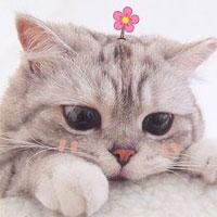 Tổng hợp 70 hình nền mèo cute cho điện thoại