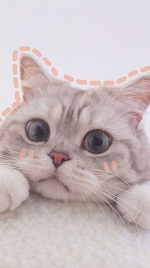 Hình nền mèo cute 8